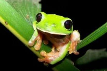 Köper du Oils of Life hjälper du kanse till att rädda den här lilla härliga grådan som lever i sydamerikas regnskogar