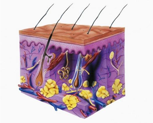 Under hudens yta pågår det hela tiden en massa kemiska reaktioner. Foto från Getty