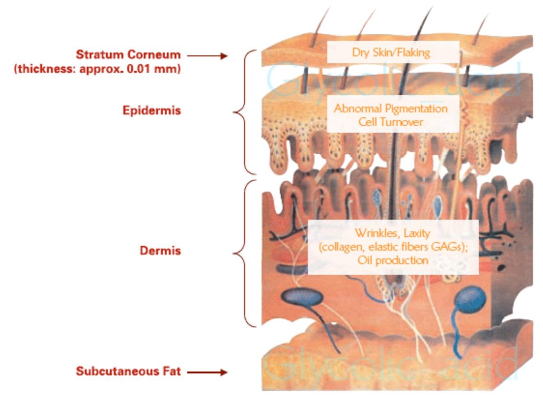 hur fungerar huden