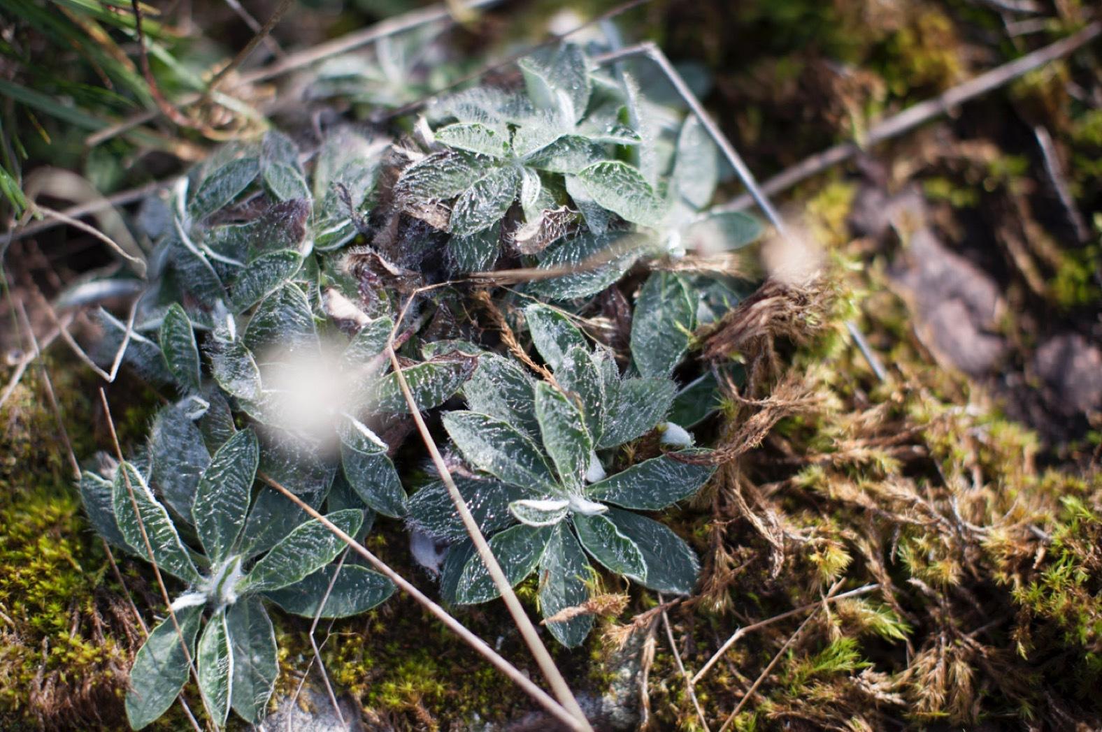 Lumenes nya kroppsserie tar avstamp in den nordiska karga naturen.