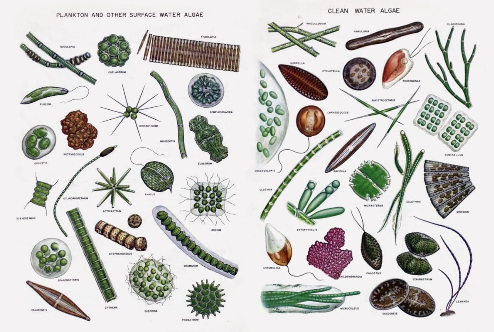 På algfarmen kan du få inblick i vilka alger som är mest nyttiga för organismen och på vilket sätt- Bild från Simris Alg